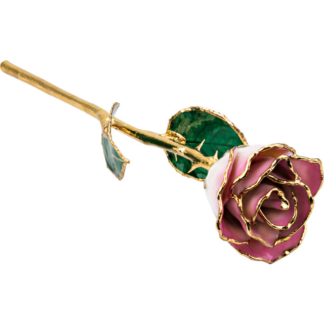 Lacquered Cream Pink Rose with Gold Trim