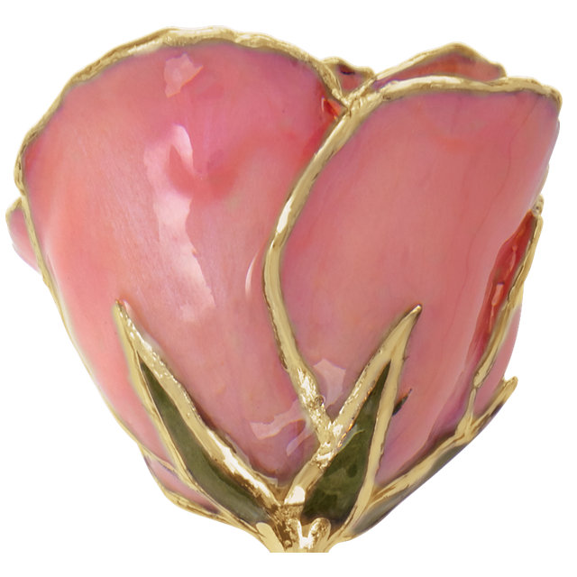 Lacquered Pink Pearl Rose with Gold Trim